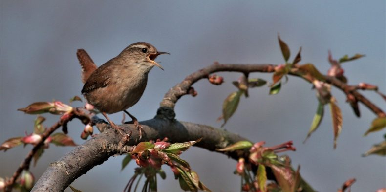 Why Bird Music Is Great For Relaxation And Anxiety