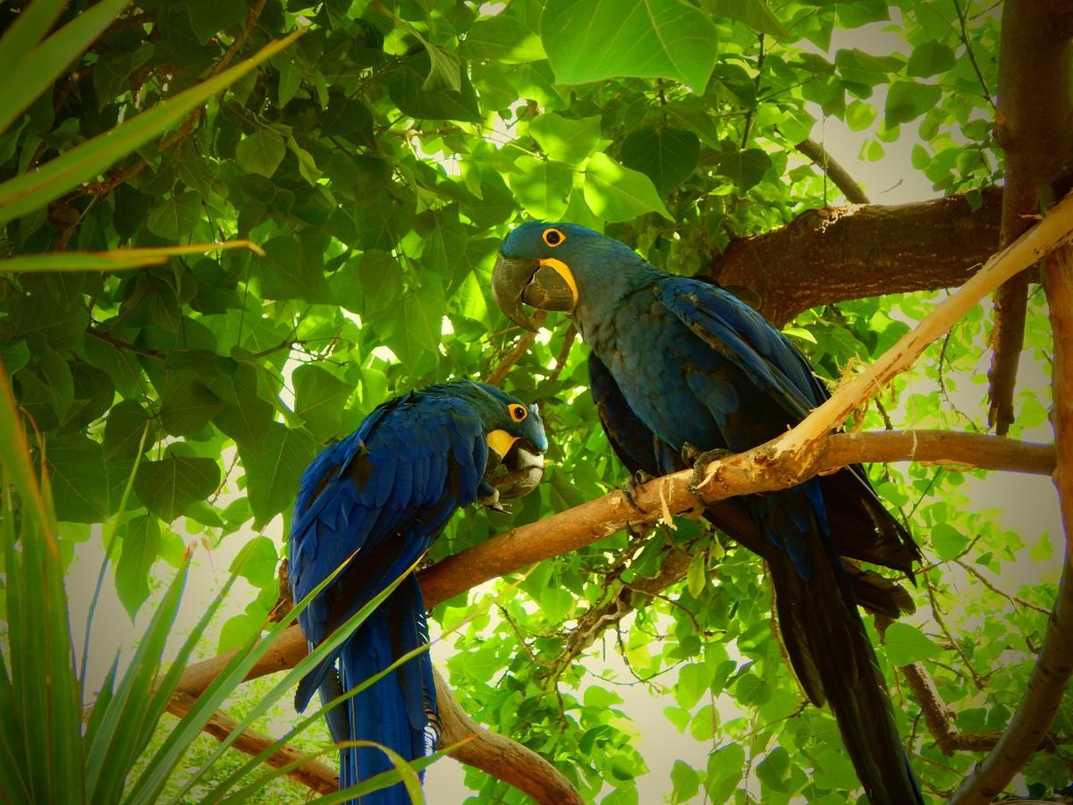 Rainforest Birds: Beautiful, Exotic Birds From The Rainforest!